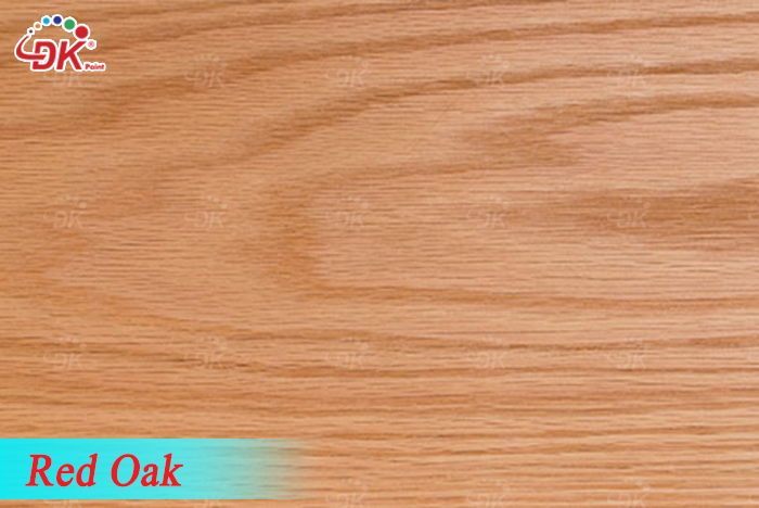 Gỗ Sồi đỏ (Red Oak) xuất xứ từ Mỹ và các nước Châu Âu
